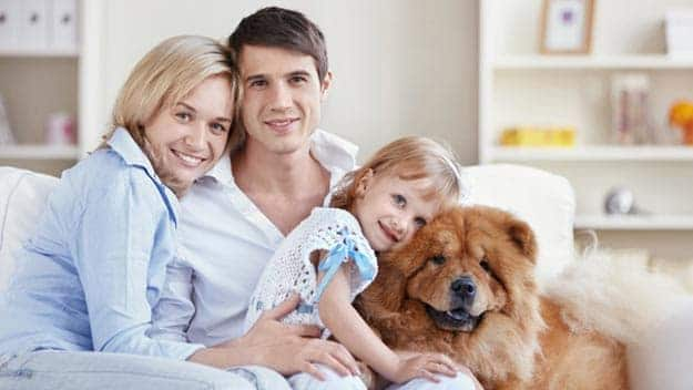 Wills & Trusts dog-young-family Direct Wills Taunton